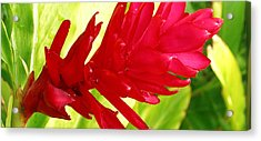 Red Ginger Flower Acrylic Print by James Temple