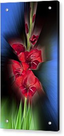 Acrylic Print featuring the photograph Red Gladiola by Mark Greenberg