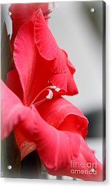 Lady In Red Acrylic Print by Patti Whitten