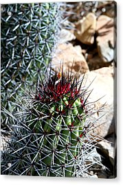 Red Hat Acrylic Print by Dick Botkin