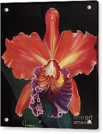 Red Hawaiian Orchid Acrylic Print