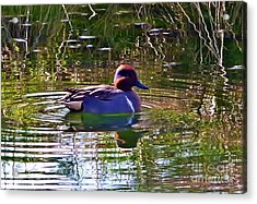 Acrylic Print featuring the photograph Red Headed Duck by Susan Garren