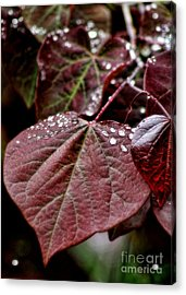 Red Heart Acrylic Print by Peggy Hughes