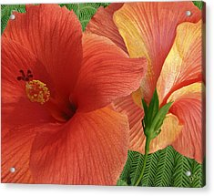 Acrylic Print featuring the photograph Red Hibiscus by Ben and Raisa Gertsberg