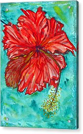Red Hibiscus Flower Acrylic Print by Kelly     ZumBerge