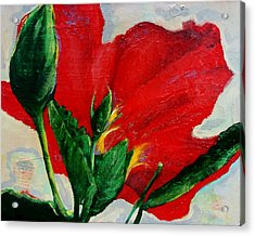 Red Hibiscus Acrylic Print by Jean Cormier