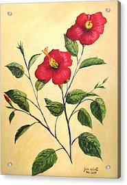 Acrylic Print featuring the painting Red Hibiscus by June Holwell