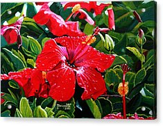 Red Hibiscus Acrylic Print by Marionette Taboniar