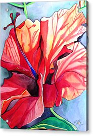 Red Hibiscus Tropical Flower Acrylic Print by Sacha Grossel