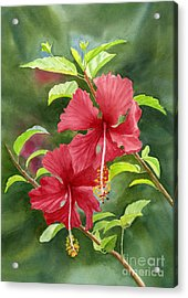Red Hibiscus With Background Acrylic Print