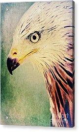 Red Kite Art Acrylic Print