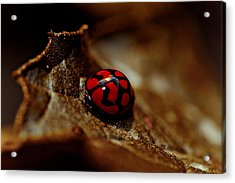 Red Lady Bug Acrylic Print by Isabel Laurent