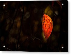 Red Leaf 2 Acrylic Print