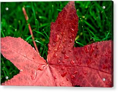 Acrylic Print featuring the photograph Red Leaf by Crystal Hoeveler