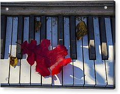 Red Leaf On Old Piano Keys Acrylic Print