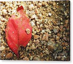 Red Leaf Acrylic Print by Venus