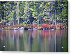 Red Leaved Shrubs Dot A Shoreline Acrylic Print