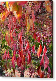 Red Leaves And Berries Acrylic Print