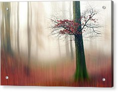 Red Leaves And The Hidden Path. Acrylic Print