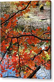 Red Leaves By The Pond Acrylic Print by Linda Marcille