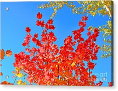 Acrylic Print featuring the photograph Red Leaves by David Lawson