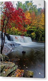 Red Leaves In Dupoint Park Hooker Falls Acrylic Print