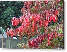 Red Leaves In The Rain Acrylic Print by Carolyn Ricks