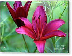 Red Lillies Acrylic Print