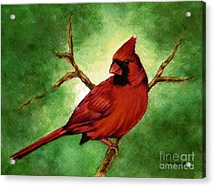 Red Male Cardinal Acrylic Print by Nan Wright