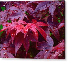 Acrylic Print featuring the photograph Red Maple After Rain by Ann Horn