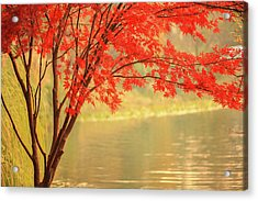 Red Maple Besides River Acrylic Print by Uschools