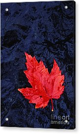 Red Maple Leaf And Black Stone - Fs000222 Acrylic Print by Daniel Dempster