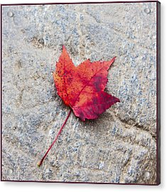 Red Maple Leaf On Granite Stone In A Square Format Acrylic Print by Karen Stephenson