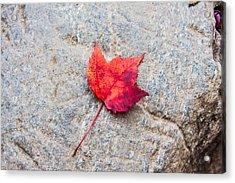 Red Maple Leaf On Granite Stone In Horizontal Format Acrylic Print by Karen Stephenson