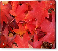 Red Maple Leaves Carpeting The Ground Acrylic Print
