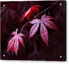 Red Maple Trio Acrylic Print
