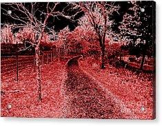 Red Night Trail Acrylic Print by Mickey Harkins