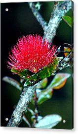 Acrylic Print featuring the photograph Red Ohia Lehua In Hawaii Volcano Mist by Lehua Pekelo-Stearns