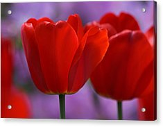 Red On Pink Acrylic Print by Juergen Roth