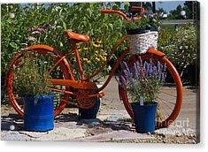 Red Orange Flower Basket Bike Acrylic Print