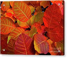 Acrylic Print featuring the photograph Red Orange Leaves by Charles Lupica