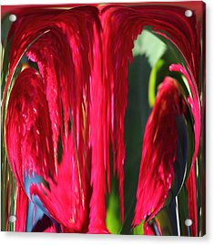 Red Orb Acrylic Print by Rhonda Humphreys