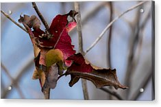 Red Over Branch Acrylic Print