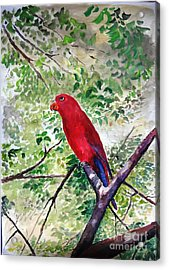 Acrylic Print featuring the painting Red Parrot Of Papua by Jason Sentuf