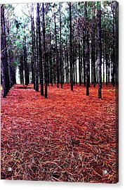 Red Path Acrylic Print