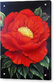 Red Peony Acrylic Print