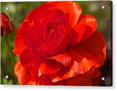 Red Peony Acrylic Print by Sharin Gabl