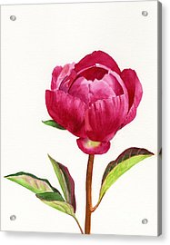 Red Peony With Leaves Acrylic Print by Sharon Freeman