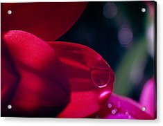 Acrylic Print featuring the photograph Red Petal by Mark Greenberg