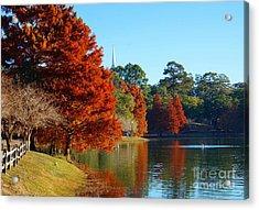 Red Pine On Lake Ella Acrylic Print